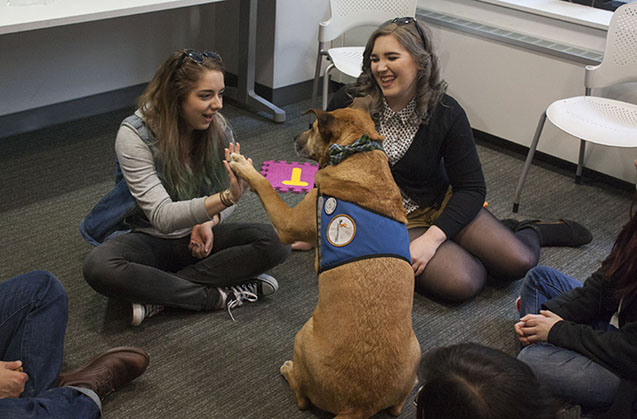 therapy dog with students during de-stress fest